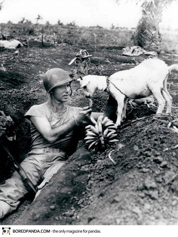 Shares a banana with a goat. US Soldier, WWI