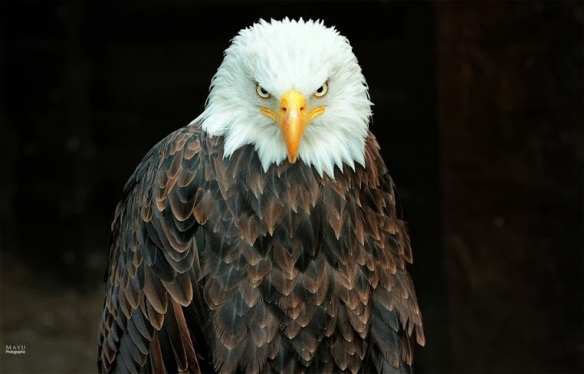 Our nations bird.