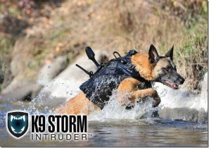 Navy SEALs Dogs