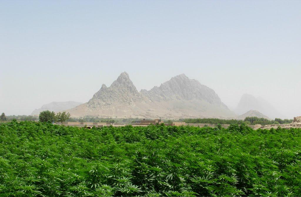 раздел создан фото чудной долины ахмедова осудили