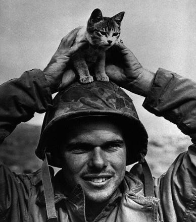 Vietnam Kitty