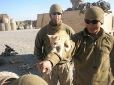 Afghanistan Kitty