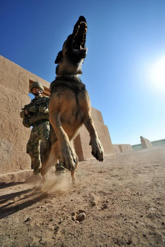 Royal British Army Soldier and his MWD, Afghanistan, 2011