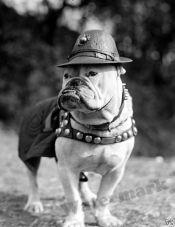 USMC Sgt Jiggs Marine Corps Bulldog Mascot Year 1925