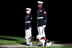 Two Marine Corps Corporals escort the current and prior English Bulldog mascots, Chesty XIII and Chesty XIV during an evening parade