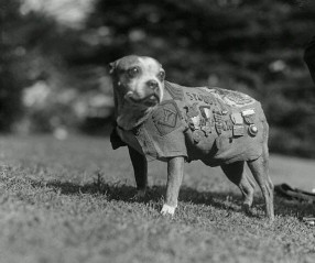 Most decorated war dog during WWI